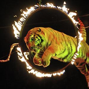Цирки Челябинска