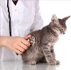 Ветеринарные клиники в Челябинске